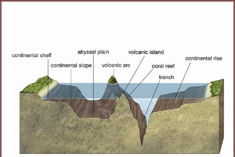 Continental Shelf Slope And Rise by Schematic Diagram Shows Continental Shelf Slope Trench