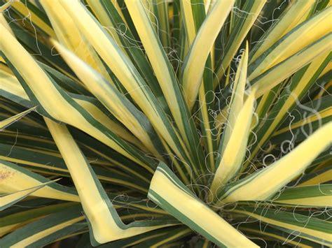 yucca color guard colorguard yucca