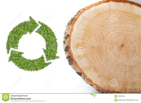 tree trunk cross section cross section of tree trunk with recycle symbol stock