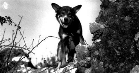 war dogs 2 dogs of war 23 facts you never knew about working dogs