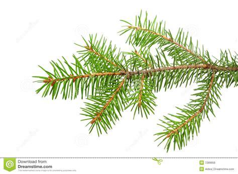 Home Decor Globe fir branch royalty free stock image image 7289956