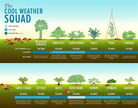 Top 13 Cool Weather Vegetables and How to Grow Them   Home
