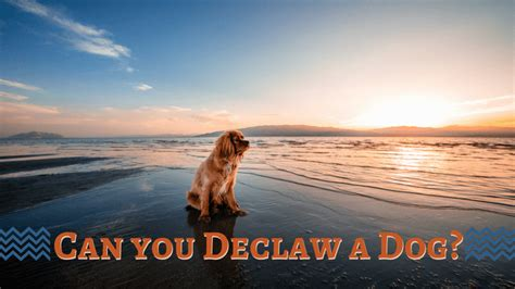 declawing dogs can you declaw a smart owners
