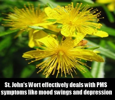 drugs for pms mood swings 8 best herbal remedies for pms best herbs for pms