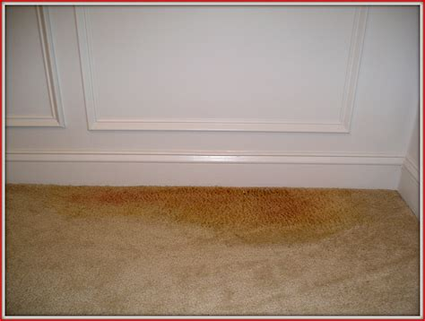on carpet how to remove pet odors stains smells from damaged carpet