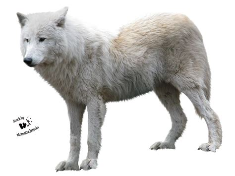 lobo haircut cut out stock png 90 white wolf profile by