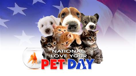photo gallery national love  pet day   news