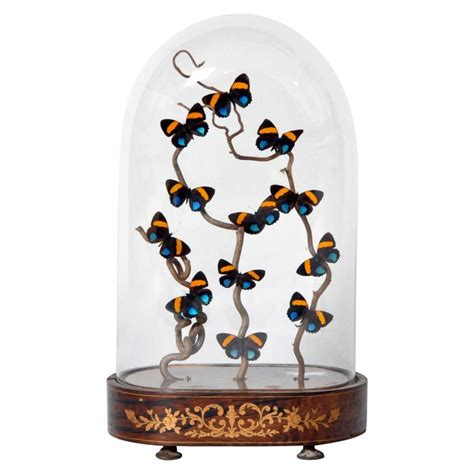 decorative cloche with butterfly display for sale at 1stdibs