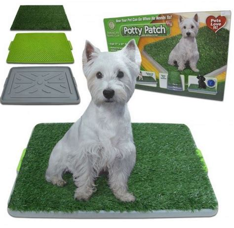 potty patch for dogs official potty patch website now your pet can go when he needs to