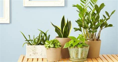best indoor plants for oxygen 15 plants that will convert your home into an oxygen villa