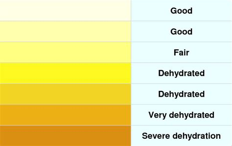 hydration chart dehydration urine color chart related keywords