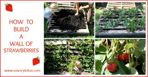 Raised Bed Gardening Ideas How To Build A Wall Of Strawberries Savory Lotus