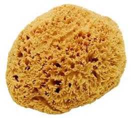 Rv Garage large natural sea sponge