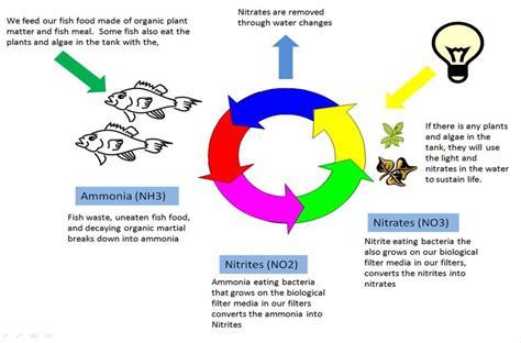 fish cycle diagram cycling your aquarium aquarium nitrogen cycle start