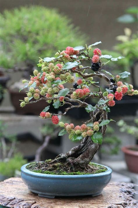 bonsai secrets designing growing 17 best ideas about bonsai garden on bonsai bonsai tree types and bonsai forest