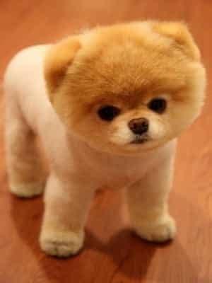 imagenes de animales pequeños resultado de imagen de perros peque 241 os perros