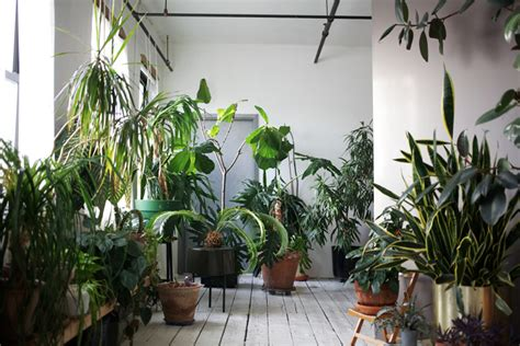 indoor plant design in brooklyn a plant filled loft design sponge