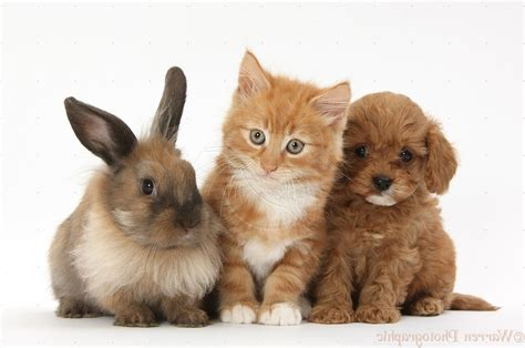 baby puppies and kittens best free baby puppies and kittens bunnieschild of artemis photos