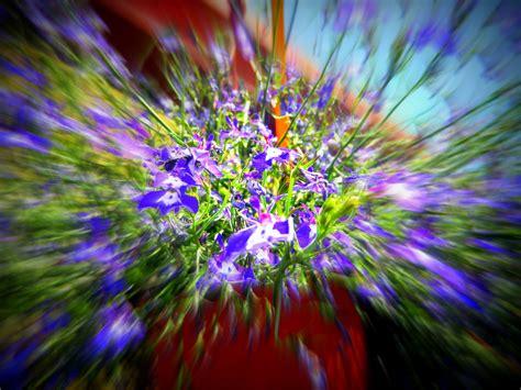 immagini di fiori e piante una cascata di fiori foto immagini piante fiori e