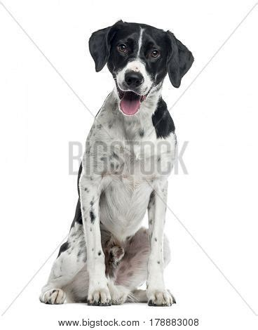 Mixed Poster 2 mixed breed sitting 2 years isolated on white