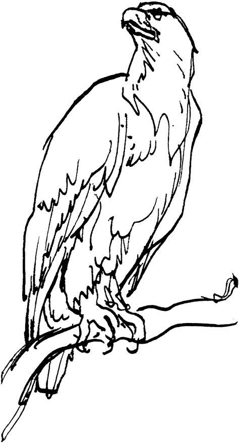 eagle feather coloring page eagle feather coloring pages