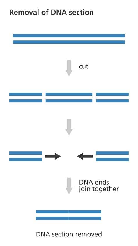 what is a small section of dna called what is genome editing facts yourgenome org