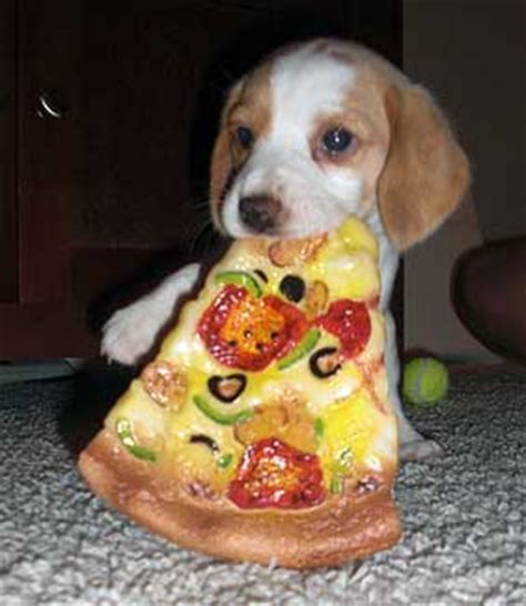 pizza puppy dogs pizza