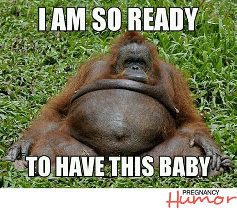 Baby Animal Memes - pregnant orangutan saying i am so ready to have this baby