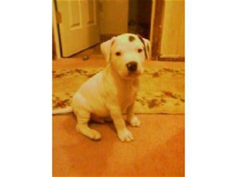 puppies for adoption dayton ohio small dogs for adoption in dayton ohio breeds picture