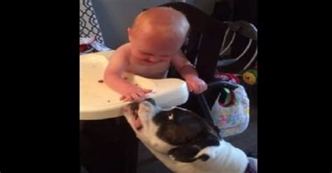what to feed baby puppies this baby feeding his spaghetti just cannot stop laughing and the two of them are