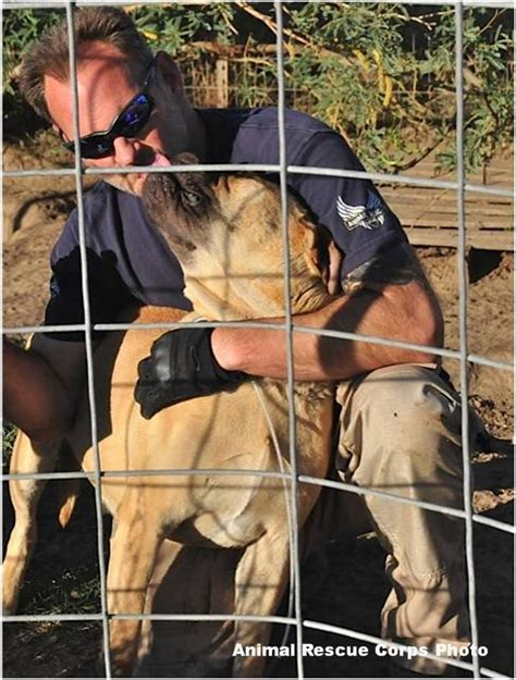 Arc Search Rescue Home animal rescue corps saves 16 negelcted mastiffs from az