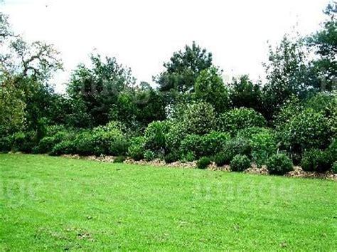 mixed evergreen foliage shrubs border  spring hedges