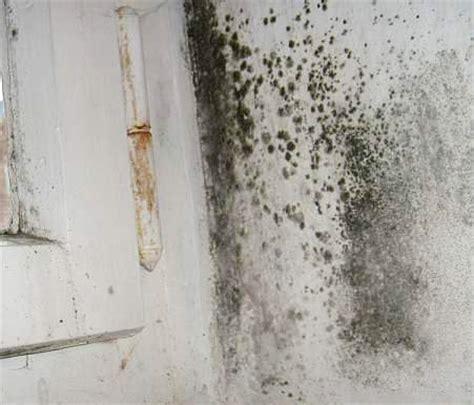 speisekammer ohne heizung stockflecken im zwickel ixel schimmel in dachd 228 mmung