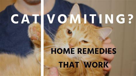 carpet  cat vomit carpet vidalondon