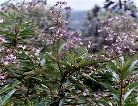 fiori californiani elenco fiori californiani le essenze t z pollicegreen