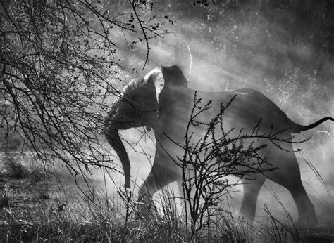 sebastio salgado from my sebasti 227 o salgado genesis animals
