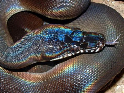 rainbow colored snake rainbow snake picture