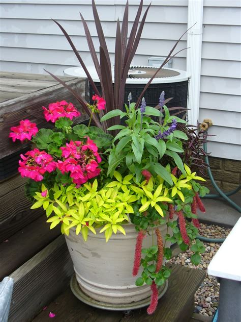 flowers on the deck flower pot ideas pinterest