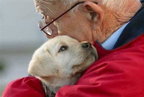12 photos of therapy dogs providing comfort after