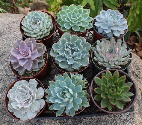 Plants That Don T Need Sun by Reproducci 243 N De Suculentas Por Esquejes