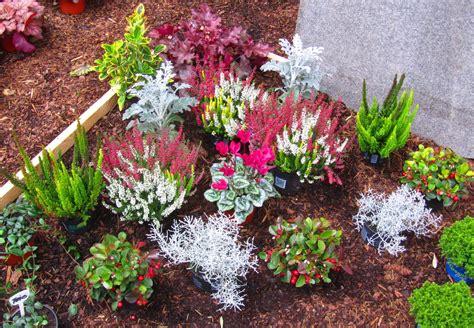 Pflanzen Sonne by Pflanzzensset Doppelgrab Sonne Pflanzen Versand Harro S