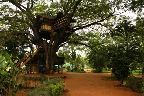 top 10 tree houses in india of nests and hideouts