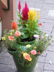 filled with portulaca and celosia for the home