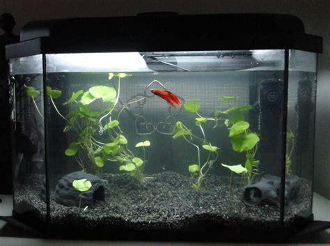 Betta Tank Decor Ideas best aquarium decorations for betta fish aquarium design