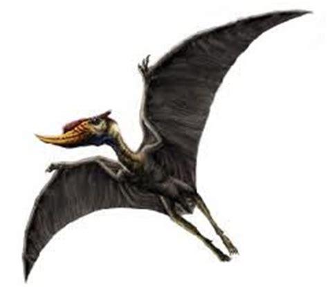 dinosauri volanti impariamo insieme i dinosauri volanti pterosauri
