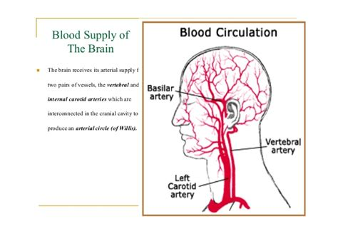 brain blood supply diagram blood supply to the brain pictures to pin on