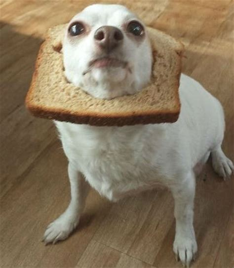is bread bad for dogs 11 thanksgiving staples that are hazardous to pups barkpost
