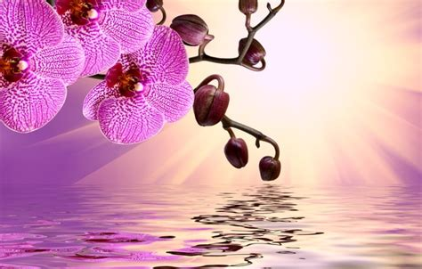 orchid blue water reflection flowers beautiful orchid wallpaper flowers flowers orchid pink