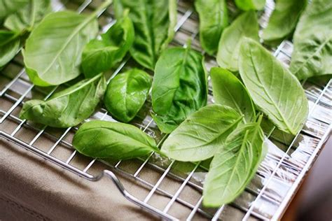 1000 images about what to do with things in my garden on pinterest freezing basil basil and