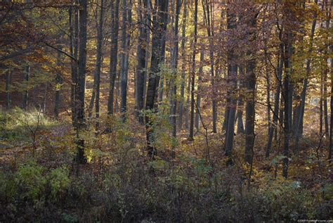 The Of The Wood by Fall Woods